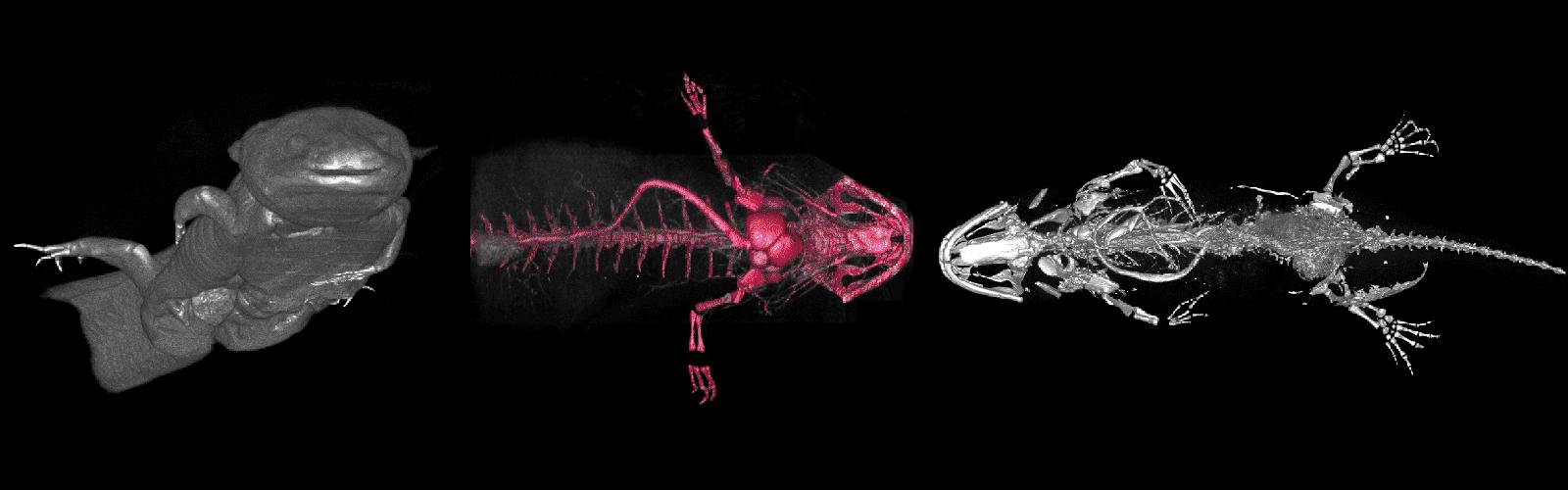 Small animal imaging hero image