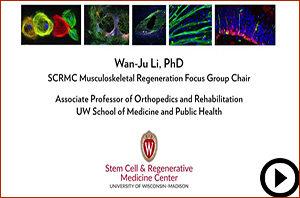 MUSCULOSKELETAL REGENERATION cover image